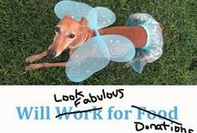 GALT Greyhound Events / GALT's Events and Fundraisers
