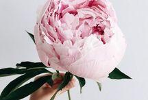 Lets get floral