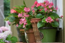 Gardens In A Container / All sorts of ideas for container gardening, large and small.