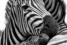 Animals  / Photos of Animals Xombana likes