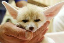 Cute Animals / Smile :-)