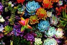 Succulents and Terrariums / All about terrariums and succulents. / by Bucks Country Gardens
