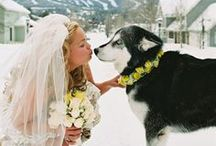Mountain Weddings / Creative ideas and stylish tips for planning a mountain wedding