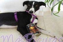 MásRicuras / ¡¡Envíanos una foto de tu mascota posando con su compra y recibirás un descuento!!