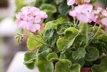 Gardenning / by Lisa_Debora