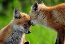 Foxie / Foxie Foxes Foxy Fox ...