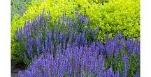 Garden Design Advice / Planting combinations and advice, hard landscaping ideas, and tips on planning your new garden layout, from the experts at Chiltern Garden Design