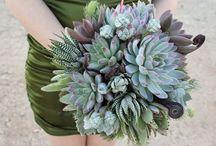 Succulents & Texture