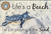 Sea Turtle Love / Sea Turtles lay eggs along the shores of Southwest Florida starting around May! These creatures are a symbol of Sanibel Island's commitment to wildlife conservation. They are beautiful!