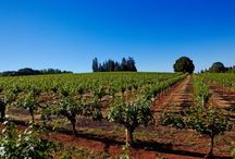 Sacto Foothill Wineries