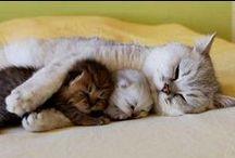 Animals / So cute!