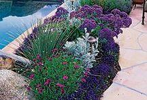 Yard ~ Pool Plantings