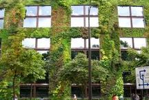 Le végétal dans la ville