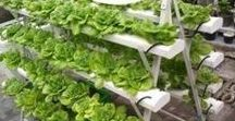 Gardening Ideas / How to raise a garden for food and self-reliance. Gardening tips, gardening tools, gardening tips, and how-to-do-it information and can be found here. Organic gardening, raising a garden, raised bed gardening, gardening tips, best vegetable gardening tips.