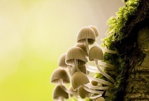 Fungi, Tree bark, Forest floor / by Ratna Setiawati