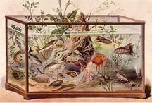 Aquarium History