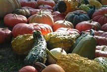 Heirloom Gardening / New for 2014 - the New Glarus Public Library Seed Catalog!  Follow this board for book recommendations, gardening tips, and other great resources. / by New Glarus Public Library