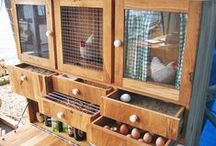 Chicken Coop / DIY Plans and ideas for your chicken coop! Easy and cheap designs that will make your chickens feel happy!