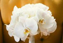 Orchidea / Orchideové inšpirácie na Váš veľký deň