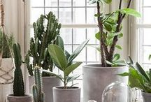 Home plants | Urban jungle / To De-Stress Your Home And Purify The Air