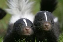 little animals / by Crib