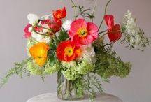 Vasos de plantas de flores