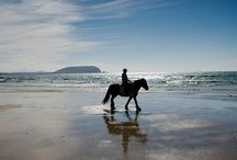 Travel to Ireland / All the places I want to visit in Ireland.