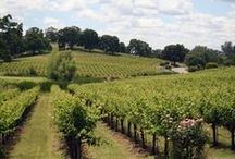 Amador Vineyards