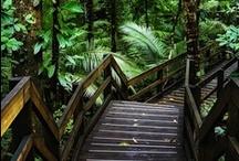 Walk this way / Paths and walkways