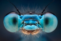 pretty insects
