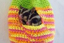 DIY Sugar Glider Toys / Well... toys for your Sugar Glider of course!