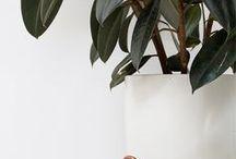 plantes / les plantes sous toute leurs formes