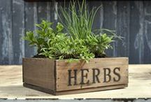 Edible Gardening / Have your garden and eat it too! Edible gardening tips, tricks and ideas. DIY herb gardens, vegetable plots and small space crops. From your friends at West Coast Gardens in Surrey, BC. www.westcoastgardens.ca