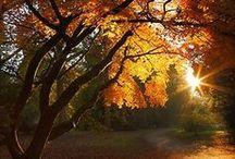 {Colorful Autumn}