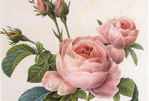 Botaniska illustrationer