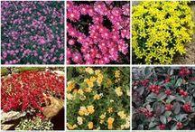 kert / Növényekről, kertről, kertészkedésről