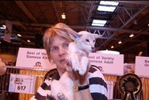 Siamese & Oriental Supreme Cat Show Winners 2015 / Check out the photos of the Siamese and Oriental Best in Show winners from the 2015 Supreme Cat Show.