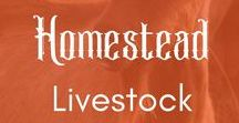 ~ Homestead Livestock ~ / The heart of a self-sufficient homestead is its livestock. Here you'll find information about cows, goats, quail, turkeys, ducks, dogs, cats, sheep, and any other working animal you raise on a homestead. #homesteading #livestock