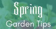 ~ Spring Garden Tips ~   Gardening   Vegetables   Harvest   Homesteading / Get your spring garden started right. You'll find info about what to grow, how to grow it, and how to avoid losing your harvest to pests (grrrr......) This board is by invitation only for bloggers I invite and pinners who are students of my Pin To 100K course. Join at http://pinto100k.com