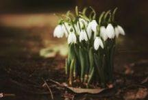 Spring is life,  joy,  start... Spring is Hope!