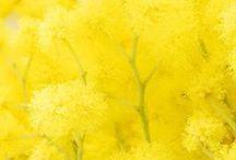 Yellow / Anything yellow