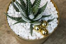 'Tis the Season / Christmas for gardeners! Indoor and outdoor home decor, wreaths, potted plant displays, orchids, container gardening, gifts and more! From your friends at West Coast Gardens in Surrey, BC. www.westcoastgardens.ca