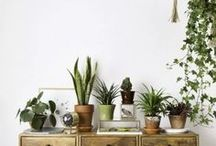 La nature envahit la déco ☘ / Inviter la nature dans notre décoration permet d'apporter un supplément d'âme à nos intérieurs. Vous pouvez vous laisser envahir par les plantes d'intérieurs : monstera, cactus et les très tendances pilea peperomioides. Ou faire des clins d'oeil à la nature avec un papier peint trompe l'oeil effet jungle ou une chaise en forme de feuille. Vive les camaïeux de verts naturels !