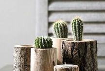 DIY Cacti Planters / Create your own cacti garden with these cool ideas! Beautiful cactus container planters, indoor home decor and more. From your friends at West Coast Gardens in Surrey, BC.