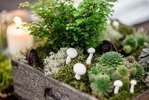 Miniature Gardens / Tiny tiny gardens! Indoor or outdoor miniature garden landscapes that will capture your heart. From your friends at West Coast Gardens in Surrey, BC. www.westcoastgardens.ca