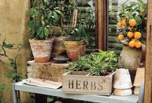The Potting Shed / A natural space for you to indulge all your garden creativity, complete with the smell of soil, blossoms and summer breezes. Enjoy your potting shed space and find unique new ideas. From your friends at West Coast Gardens in Surrey, BC.