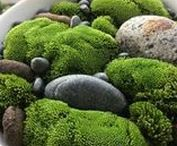 Moss Indoors and Outdoors / LOVE moss - and it's definitely a part of West Coast gardening life. Celebrate the green indoors and out with these creative ideas for moss planters and terrariums. www.westcoastgardens.ca