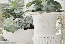 French Inspired Plants & Decor / Oui oui!! French country home style and charm - beautiful pots, rustic looks and of course, blooms!!