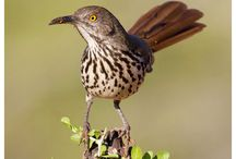 Bird Photography / Collection of outstanding bird photography. My favorite nature photography genre.