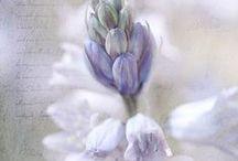 •(★)• Lavender •(★)• / by Heike Gaidischki